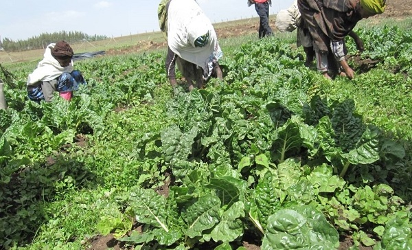 You are currently viewing UnaVillage Gircha – Water, Sanitation and Agroforestry with Permaculture
